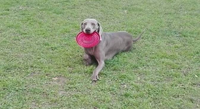 Baubau... Settiti - Dog Sitter a Palermo, dog sitter a Palermo