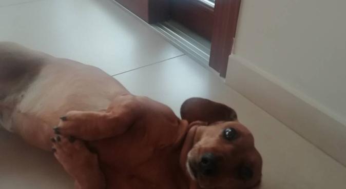 Passeggiate a 4 zampe con Guglielmo, dog sitter a Catania