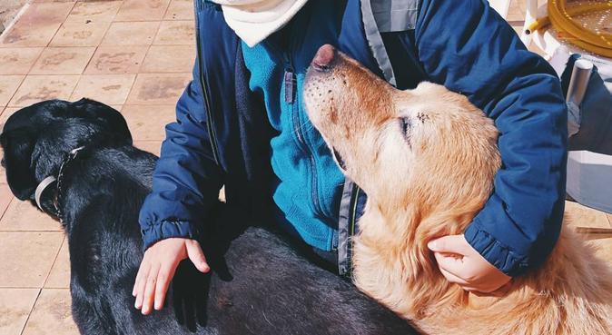 Tante coccole e passeggiate per i vostri cuccioli, dog sitter a Torino