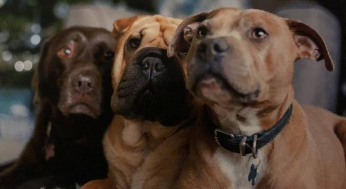 Creature Comforts Home Boarding, dog sitter in Coulsdon