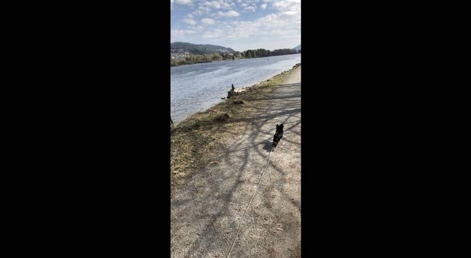 Ønsker å passe din hund!, hundepassere i Steinberg, Norge