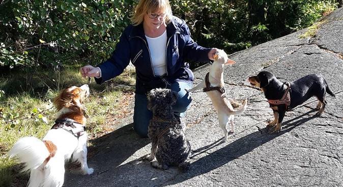 Passning av mindre hundar i Östersund, hundvakt nära Östersund