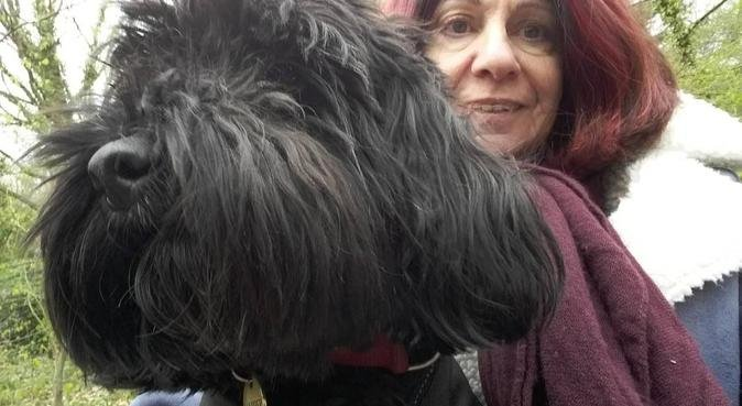 A dog-loving home from home awaits, dog sitter in London