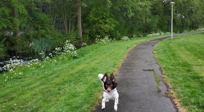 Your dog's adventure in Alphen aan den Rijn, hondenoppas in Alphen aan den Rijn