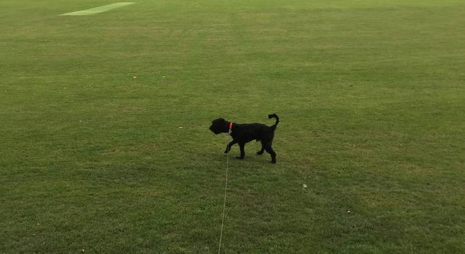 Dog Lovers household in the heart of Edinburgh, dog sitter in Edinburgh