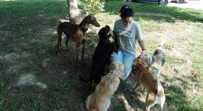Il giardino degli allegri cagnolini!, dog sitter a Polverara