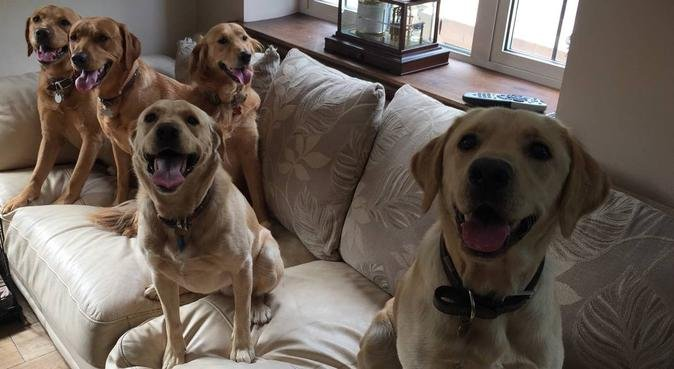 Dog holidays and day care paradise!, dog sitter in Belfast