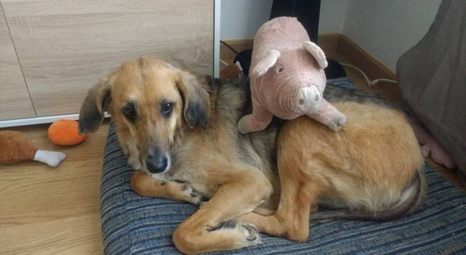 Cuidaré els teus gossos com si fossin els meus, canguro en Els Bassacs, España
