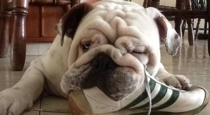 défilé de chiens🐕, dog sitter à Montpellier