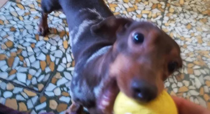 Coccole e divertimento!, dog sitter a Bologna