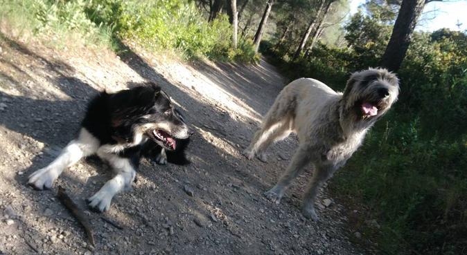Des balades sur mesure entre ville et nature, dog sitter à Marseille