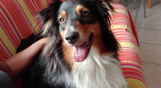 Amore,coccole,giochi,cura e tempo per cani.  :), Hundesitter in bussolengo
