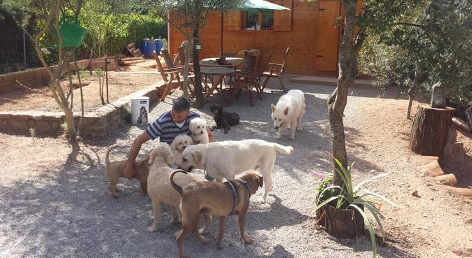 Colonias y juegos para tu pelud@!(educador canino), canguro en Terrassa