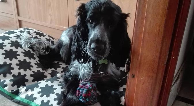 Amore Coccole e Divertimento!, dog sitter a torino