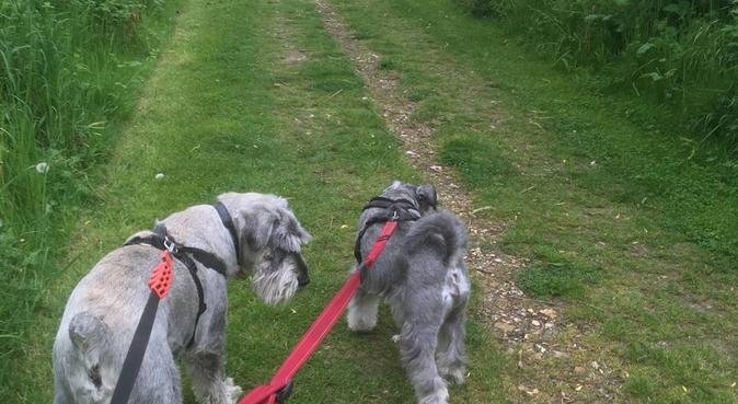 Emma's Hiking Hounds, dog sitter in Uxbridge