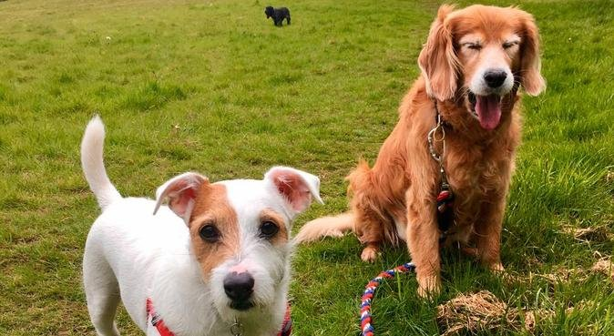 Cookie's Doggy Daycare & Dog Boarding, dog sitter in South Croydon