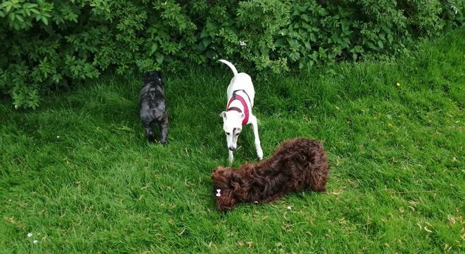 Wagtastic Walks Of Seaford, dog sitter in Seaford