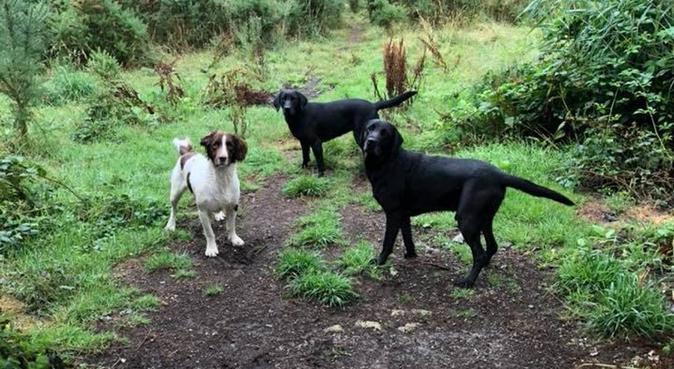 PAWFECT PET PARADISE - Your pet hotel 🐶🐹🐼🦁🐗🐴, dog sitter in Lisburn, UK