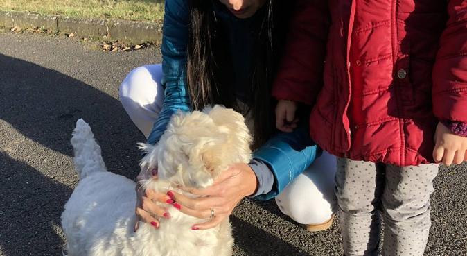 Seré una excelente amiga para tu perro, canguro en Madrid, España
