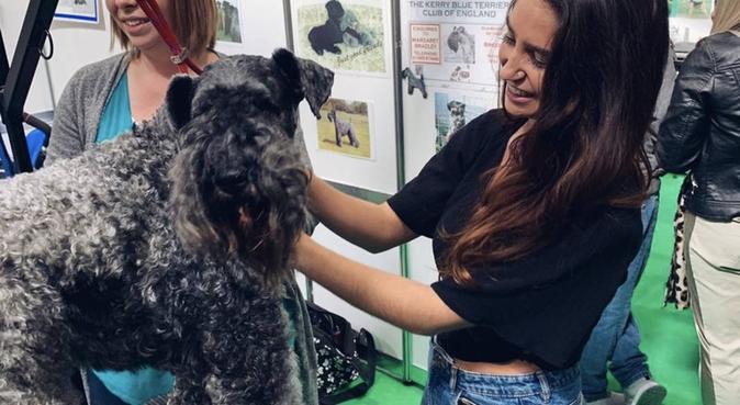 Pooch paradise in Bristol, dog sitter in Bristol