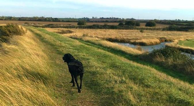 Passionately caring for your furry friends🐾, dog sitter in Cambridge
