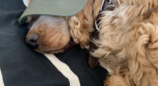 Make your dog a happy hound!, dog sitter in Basildon, UK