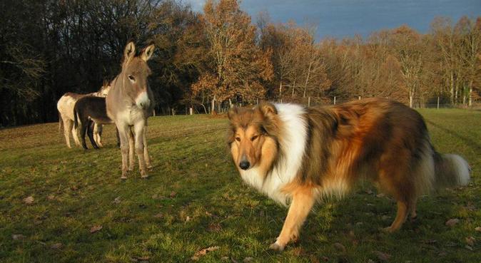 Détente, découverte, et joie de vivre!, dog sitter à Dijon