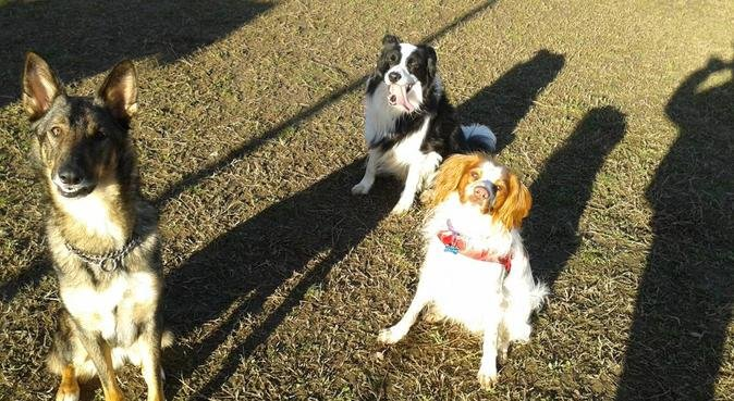 COMPETENZA, COCCOLE E PASSIONE SFRENATA, dog sitter a Bologna