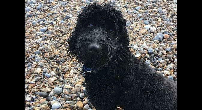 A fun, safe and caring place for your dog, dog sitter in Chichester