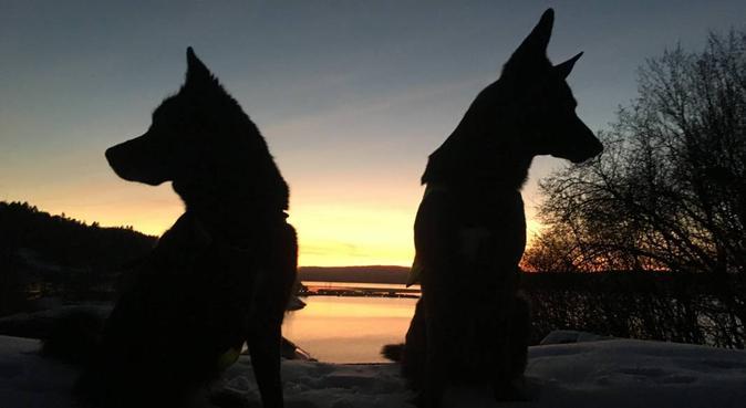 Villaluksus og turkompis ved Katten badestrand, hundepassere i Oslo