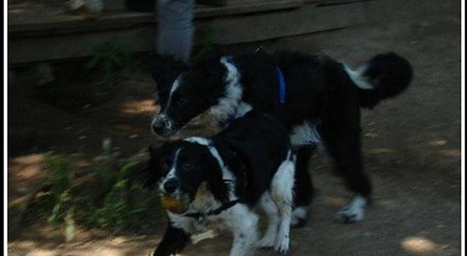 Bel connubio zii+guginetti: relax, love e giretti, dog sitter a roma
