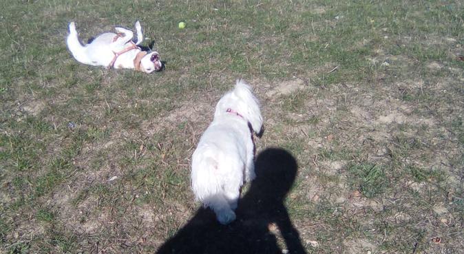 Paseador de perros Sarriguren, canguro en Sarriguren