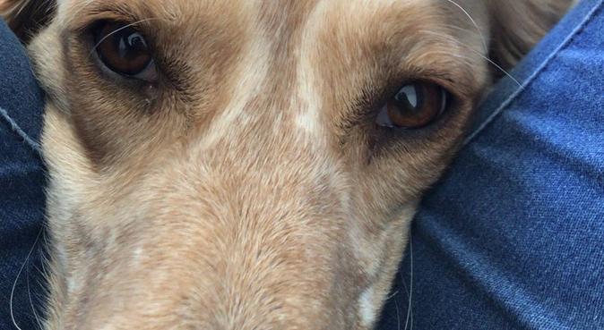 La maison des chiens heureux 🐶, dog sitter à Montpellier, France