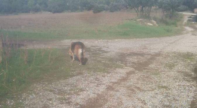 la casa de las 4 patas., canguro en MANRESA