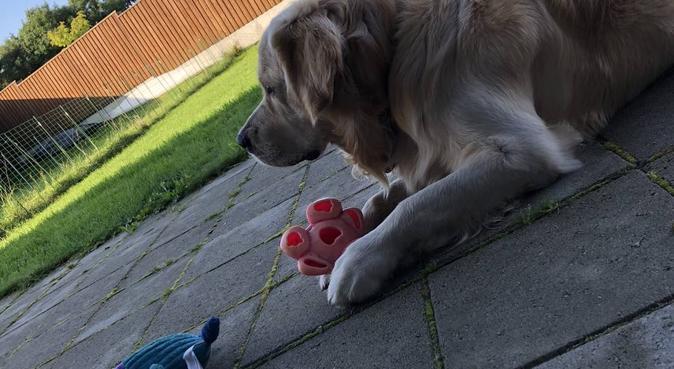 Trygg og rolig hundevenn, hundepassere i Sandnes