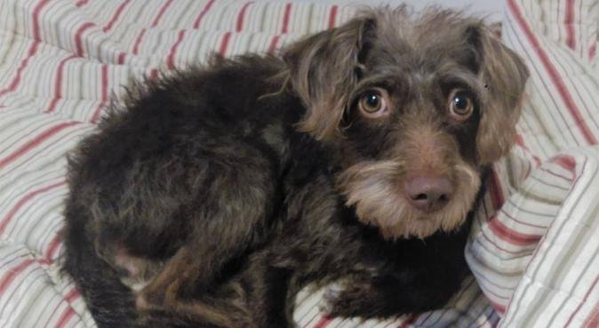 Spa de Amor y Cuidados para Perros Exigentes, canguro en Barcelona