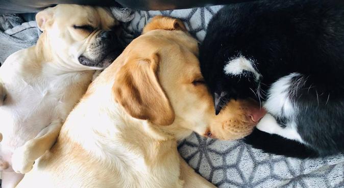Loos pour toutous, dog sitter à Loos, France