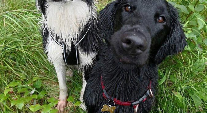 Hundeelsker og friluftsmenneske!, hundepassere i Hønefoss