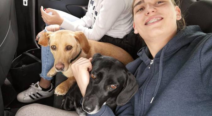 Dog sitter e passeggiatore per i vostri amici!, dog sitter a Cagliari