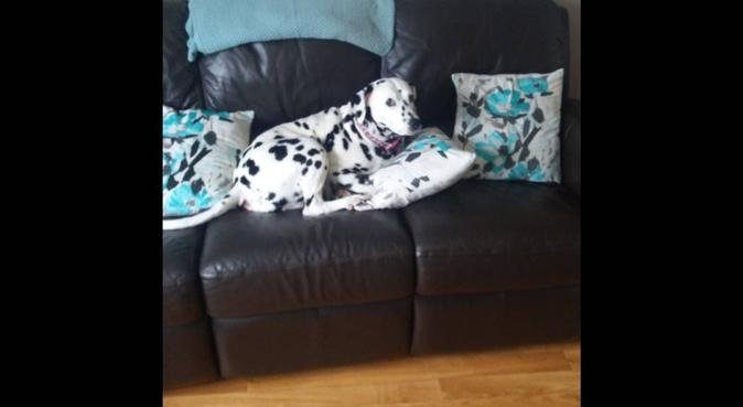 Experienced dog boarders in Risca, dog sitter in Newport