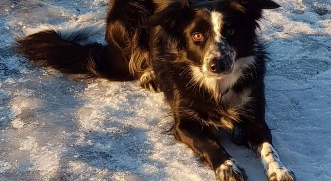 Hundens beste venn. Alltid gøy i skog og mark., hundepassere i Vollen