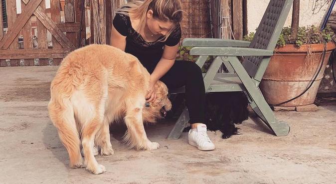 Dedizione e tanto amore per i nostri cuccioli, dog sitter a Pisa, PI, Italia