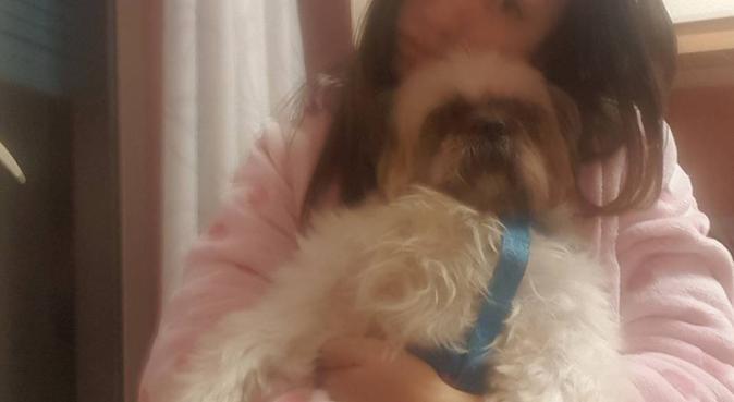 Tantissimo amore da dedicare ad ogni cucciolo, dog sitter a Catania