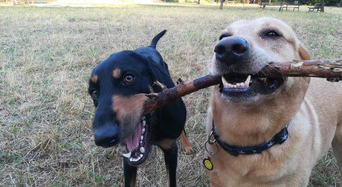 piu zampe piu amore!!, dog sitter a Roma