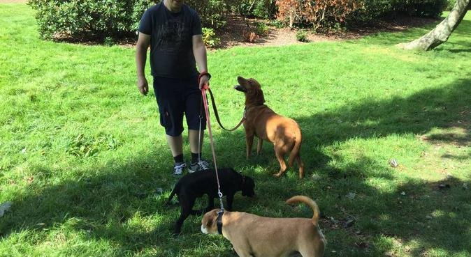 Your doggy will look forward to my visits., dog sitter in Plymouth