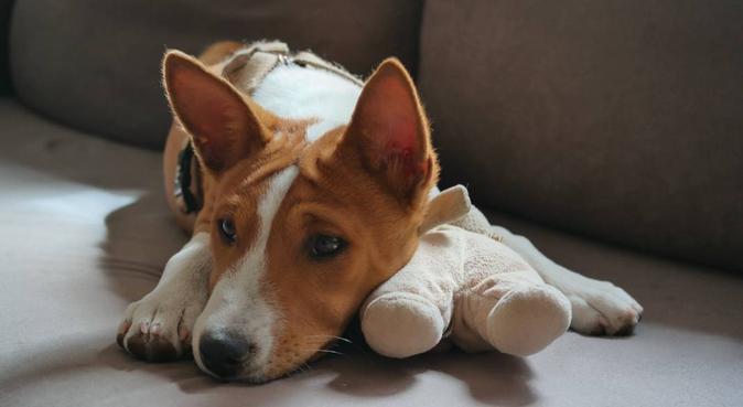 Parce qu'il ne mérite pas moins que le meilleur !, dog sitter à Paris
