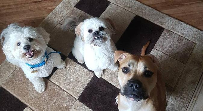 Animals At Home Merseyside LTD, dog sitter in Liverpool