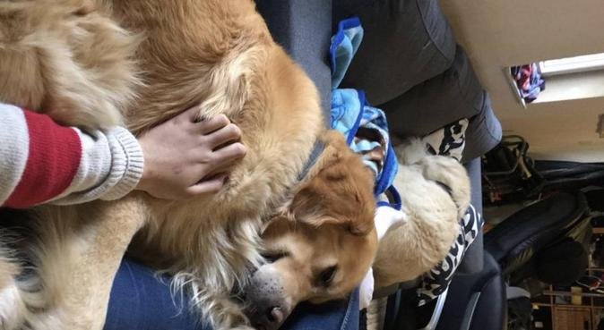 Kärleksfull och lekfull hundpassning!, hundvakt nära MALMÖ