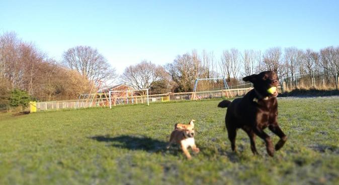 Wynne's Walkies 🐾, dog sitter in Neston