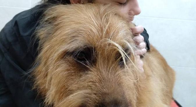 Apprendista toelettatrice, tante cure e amore, dog sitter a Napoli, NA, Italia